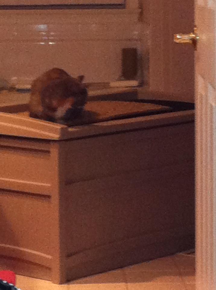 Simple Hidden Kitty Restroom