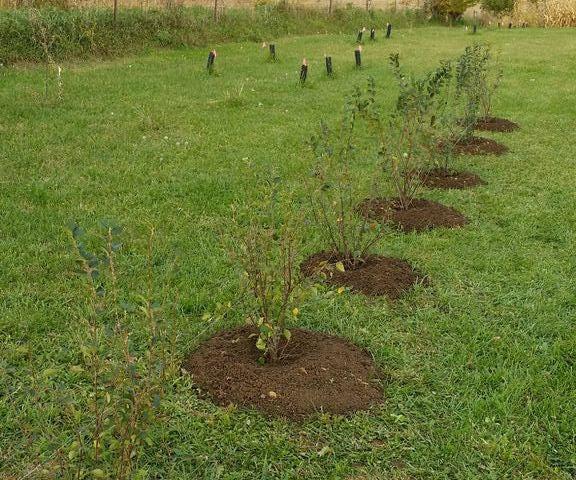 Planting Shrubs in Autumn