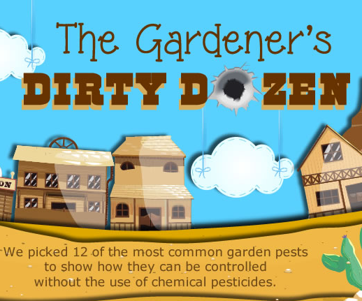 How to deal organically with 12 common garden pests without chemical pesticides