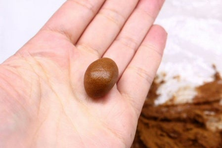 Anchoring Your Tree to Your Rock With Cinnamon Paste