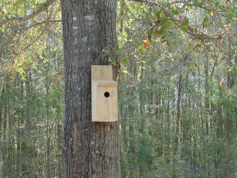 The Ultimate Pest Control - a Simple Bird House!