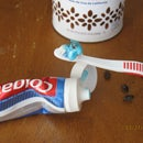 Bug in the toothpaste prank