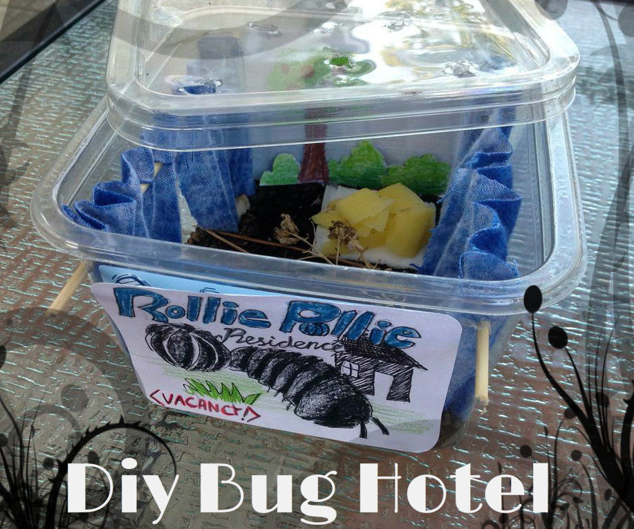 How to Make a Bug Hotel