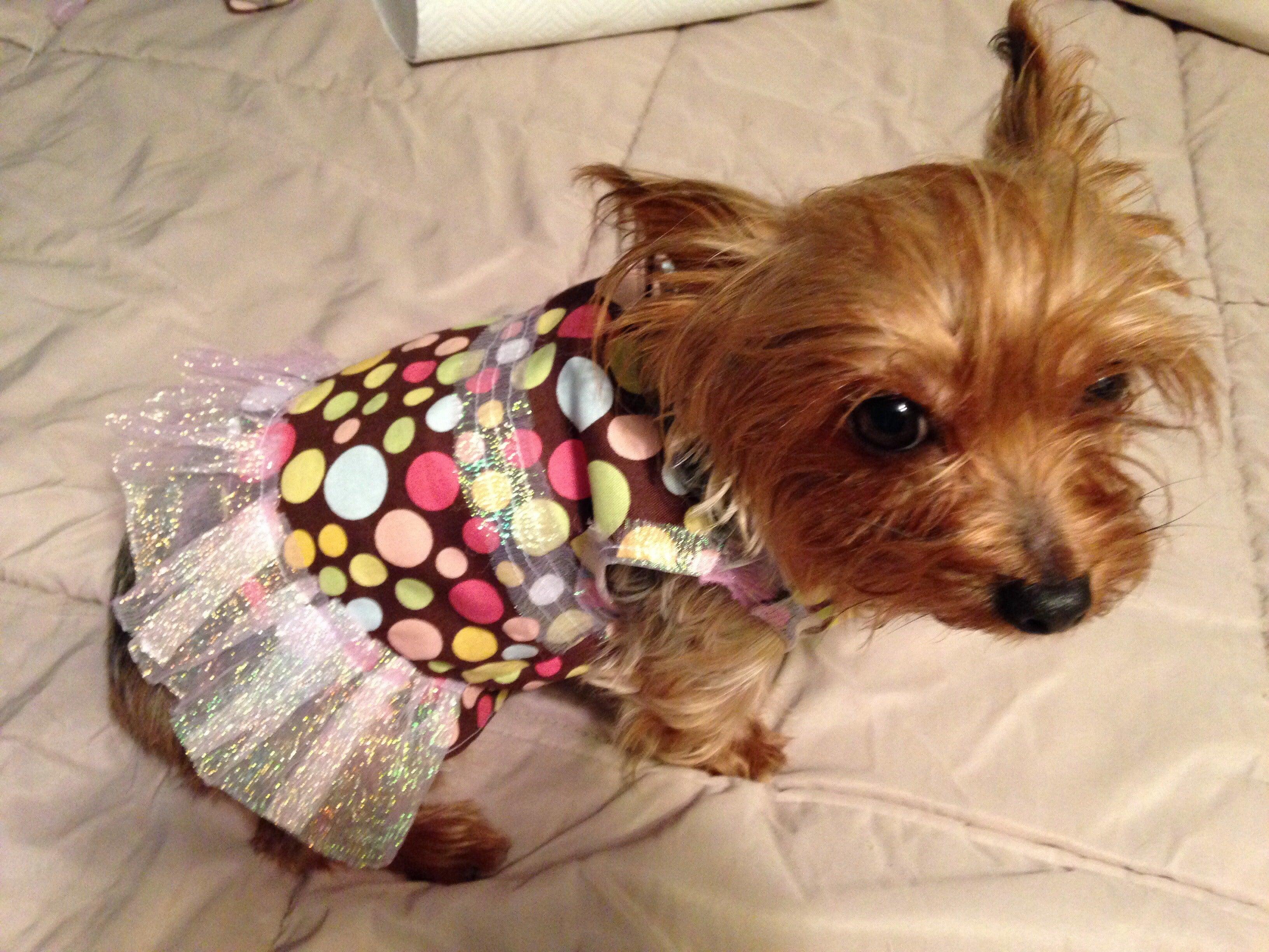 Pet Dress Dress for Pets Dress for Dogs Dog Dress Metallic Dress for Dogs Dog Metallic Dress