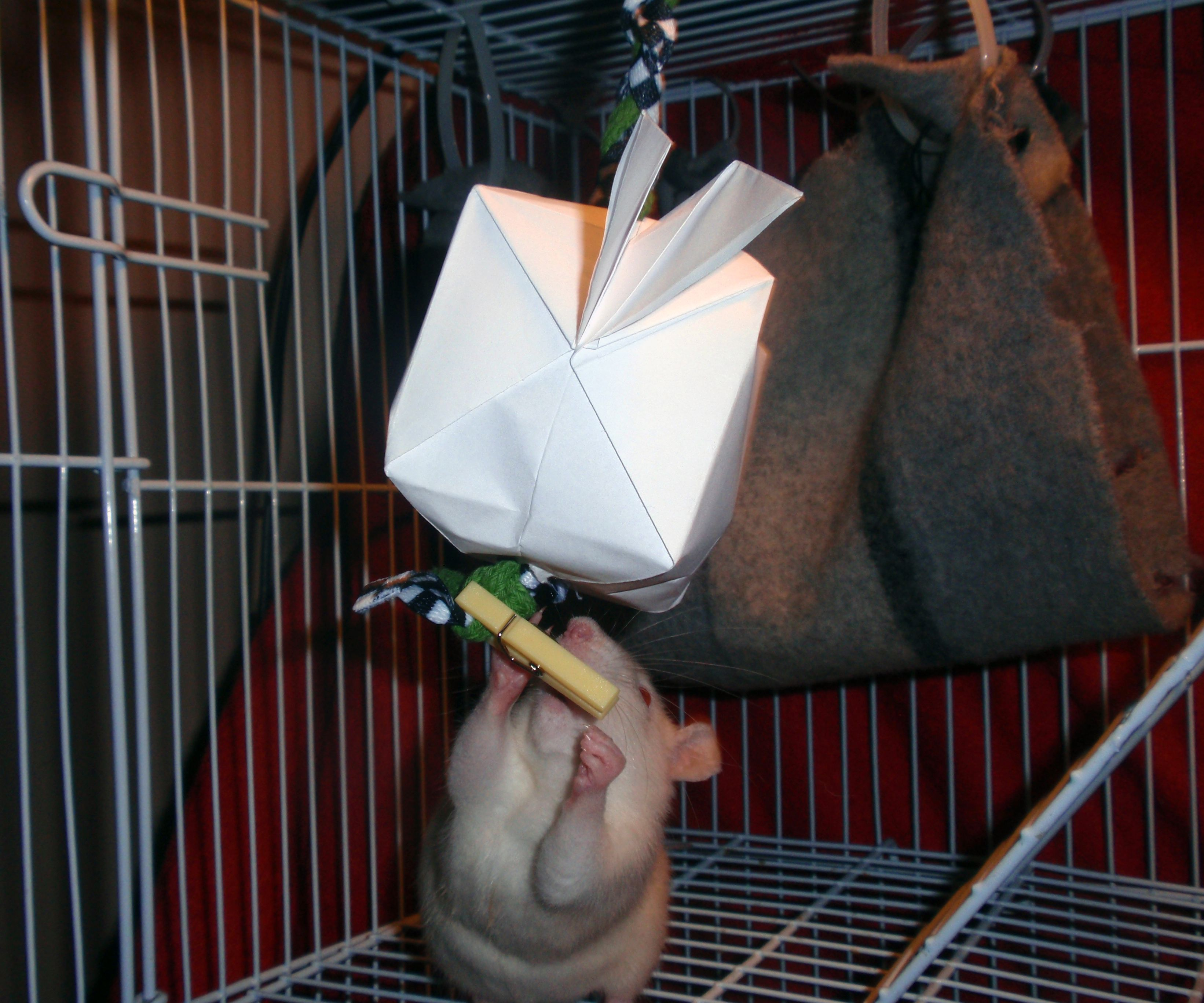 Treat filled Origami for cats or small pets!