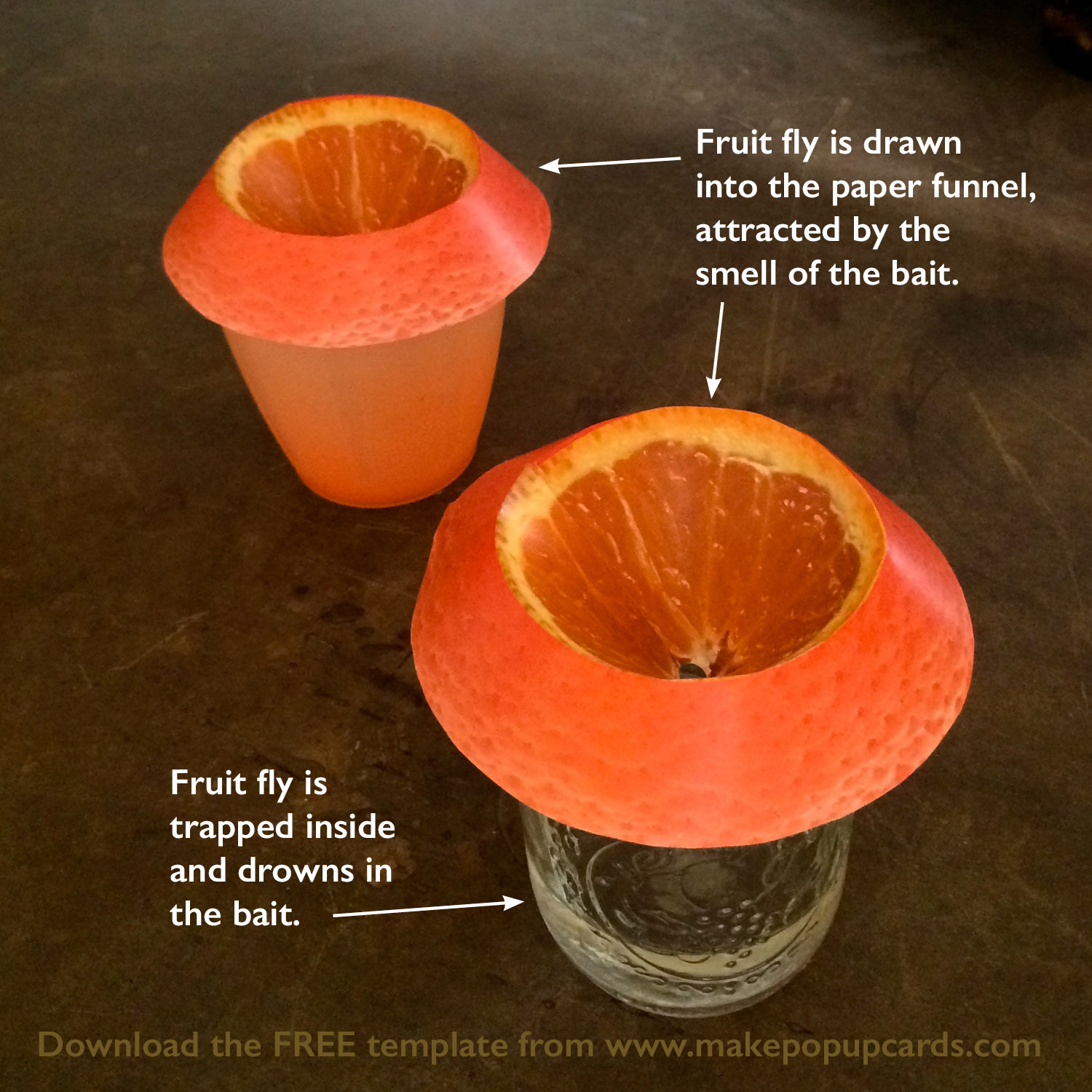 Cheap, efficient, easy (and cute!) fruit fly trap