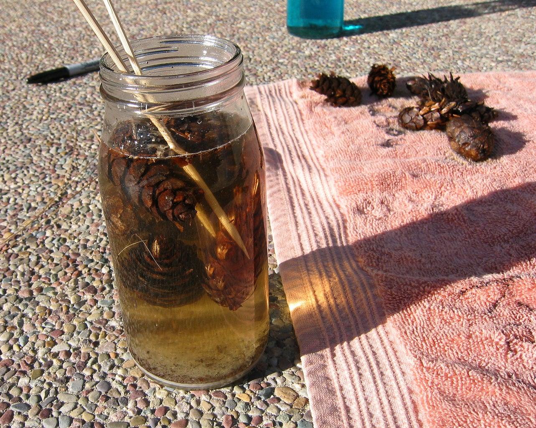 Dry the Pinecones