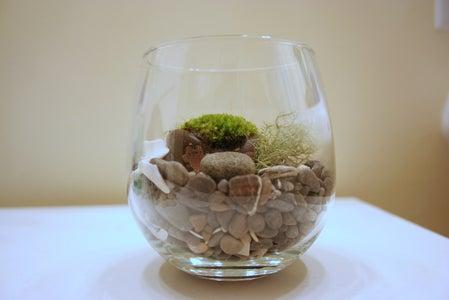 Gift Terrariums Ideas