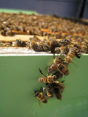 Honey Harvest and Extraction