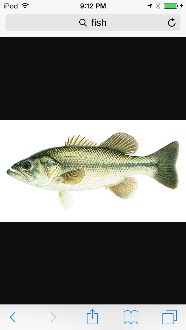 You're Done! Hope You Got Your Self a Fish