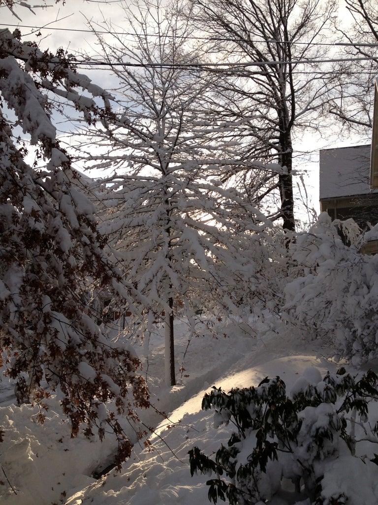 Winter Intervenes