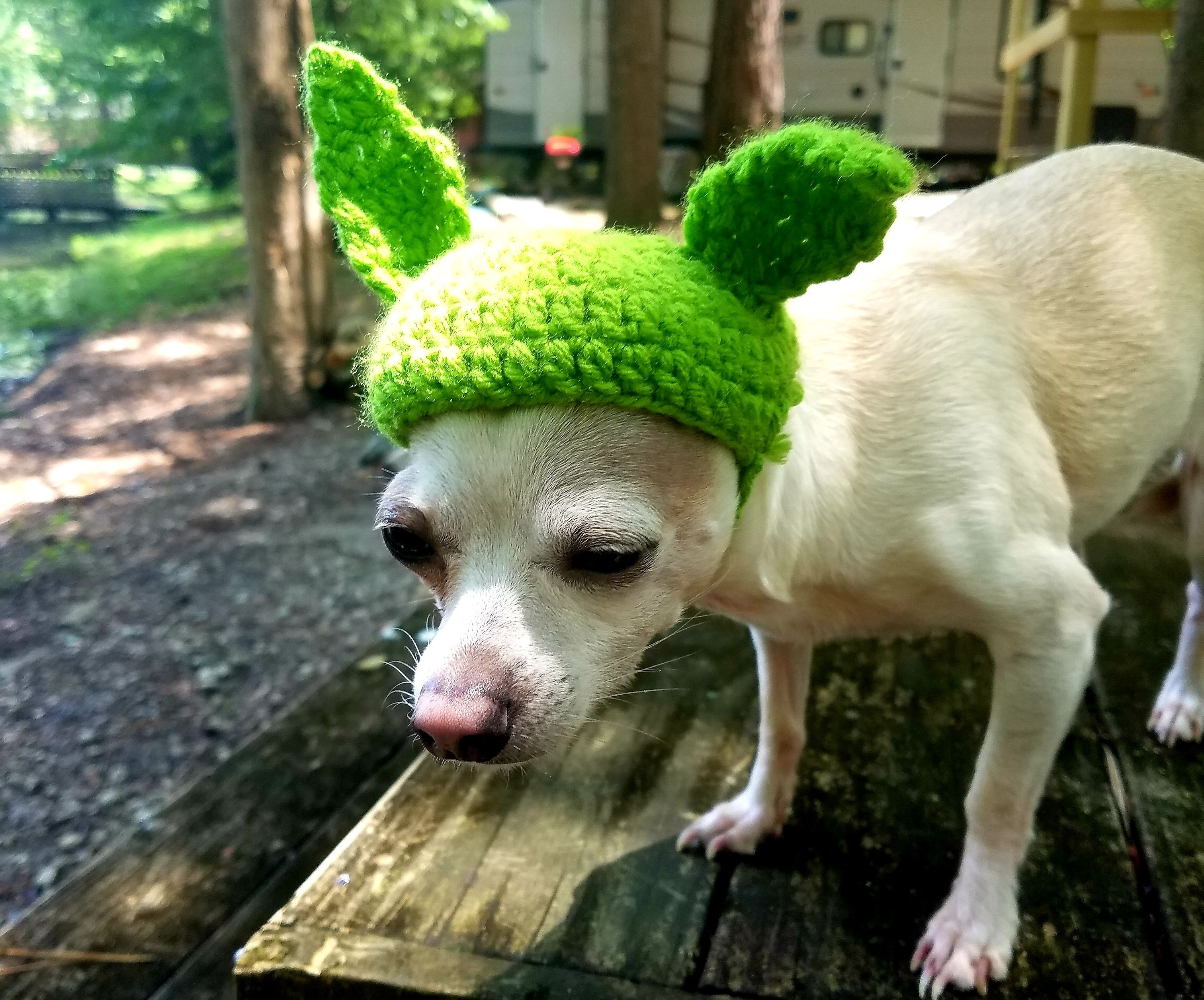 Little Baby Yoda Pet Hat ( With Baby Yoda Plushie)