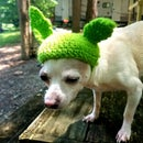 Little Baby Yoda Pet Hat ( With Baby Yoda Plushie)