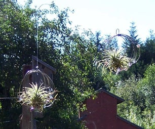 Airplant Bird Strike Deterrents for Windows