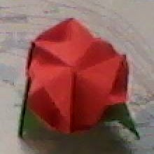 magic rose cube.jpg