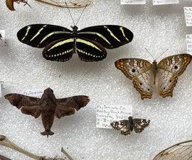 Preserving a Lepidoptera (Butterflies, Moths, and Skippers)