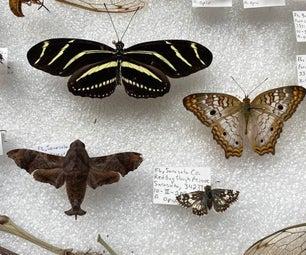 保留鳞翅目(蝴蝶,飞蛾和船长)
