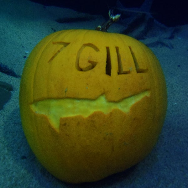 Underwater Pumpkin Carving How To