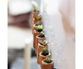 磁性软木植物