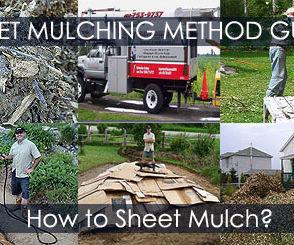 Sheet Mulching - How to Sheet Mulch