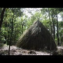 ​How to Build Grass Hut