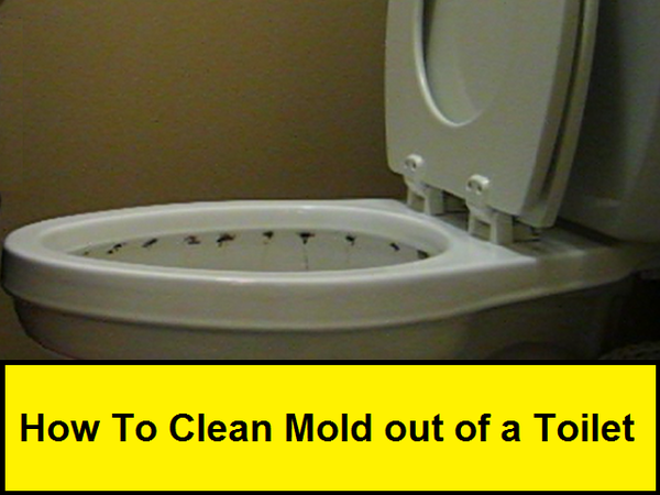 How to Clean Mold Out of a Toilet