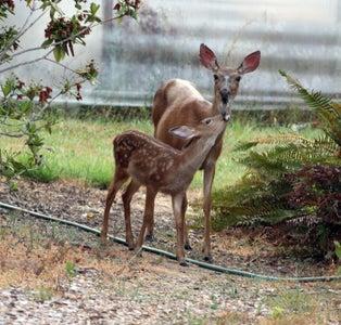Enjoy Your Kinetic Art Deer Chasers!