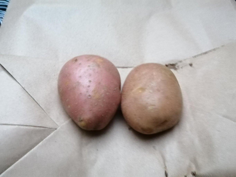Horror Potatoes!