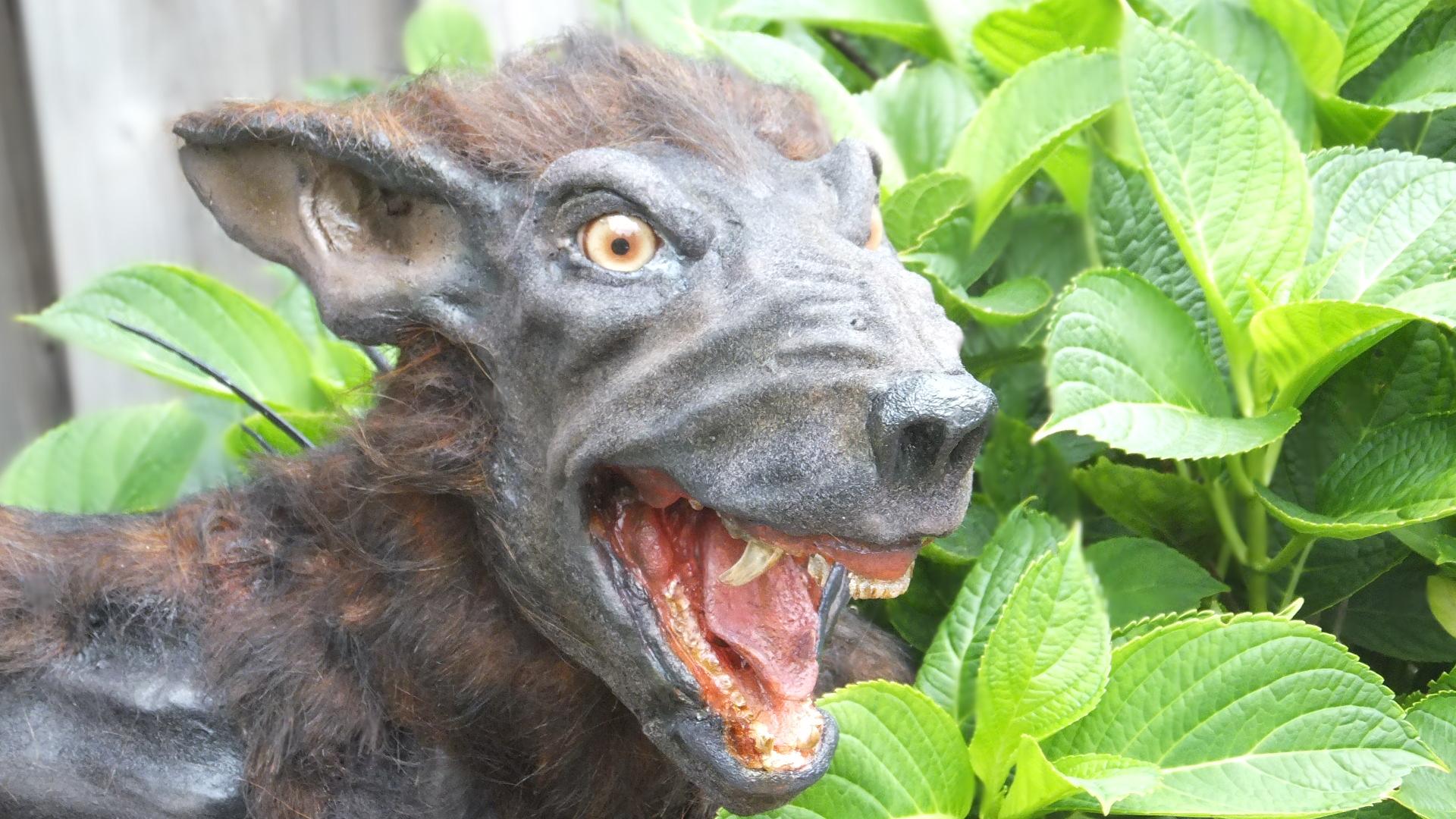 Chupacabra creature