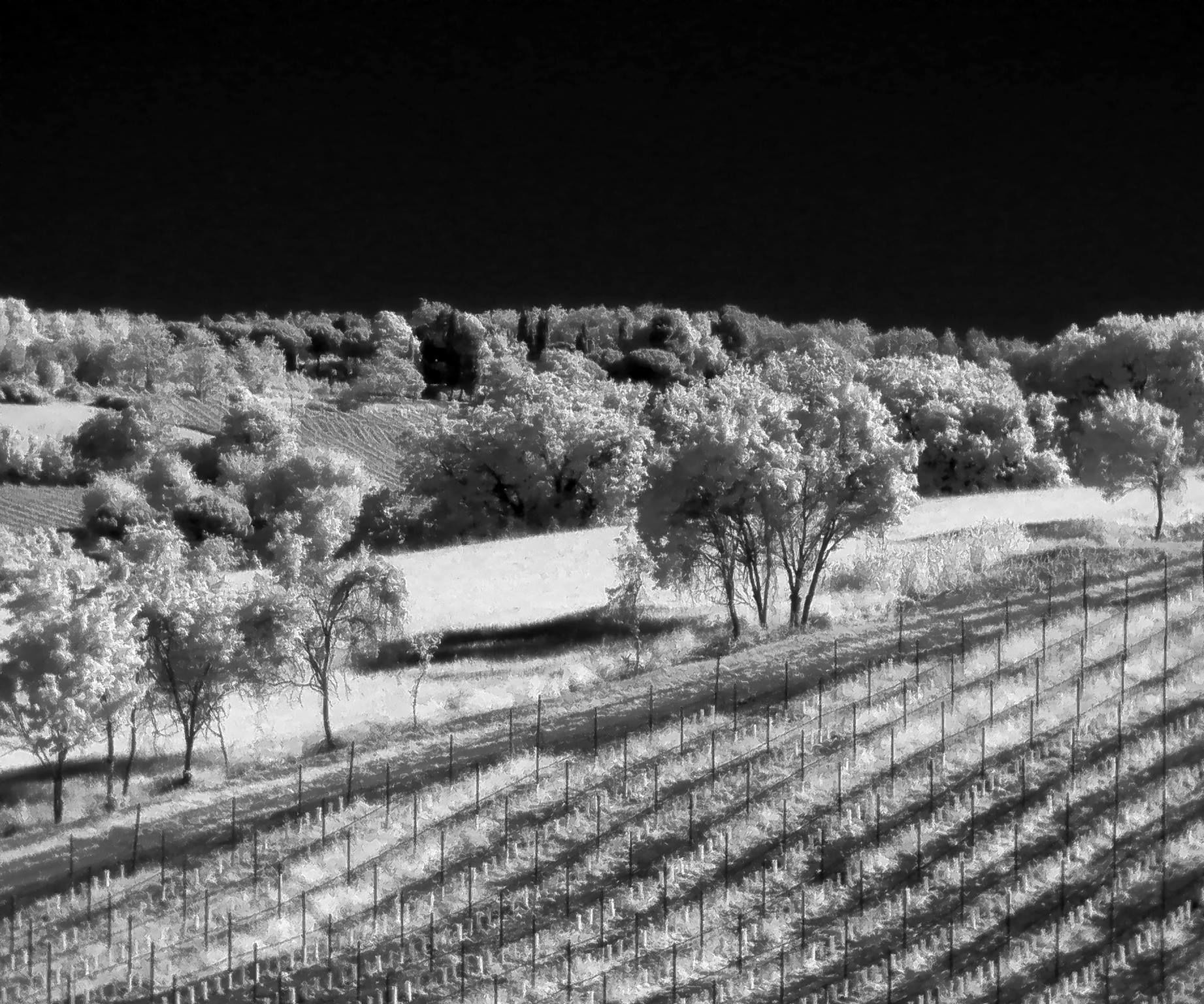 Cheap Infrared Photography