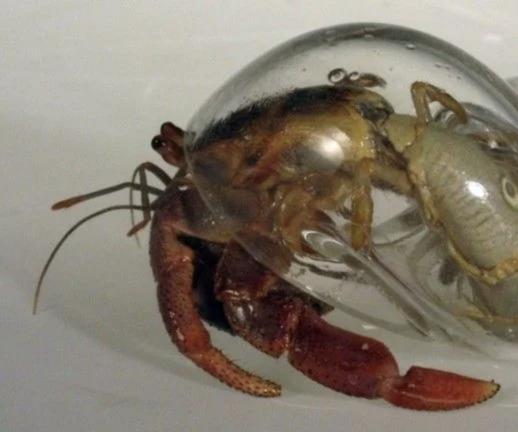 Crustacean Introduction