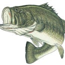 Bass fishing in the Spring