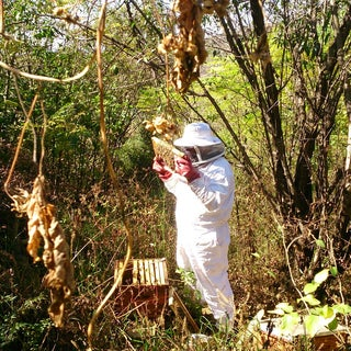 Hive/Install a Bee Colony From a Package