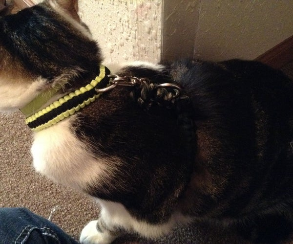 Paracord Cat Harness