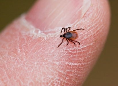 Natural Tick Repellent and Tips for Keeping Ticks Away
