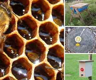 Bee and Beekeeping Projects
