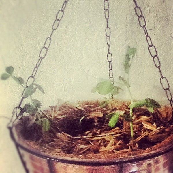 Hanging Vegetable Planters