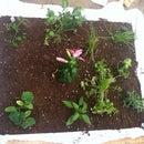 Garden Pallet