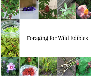 How to Get Started- Foraging!
