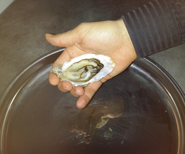 Technique d'ouverture des huitres / Technique of opening of oysters