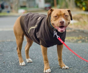 Canine Carhartt Coat for Your Pal!