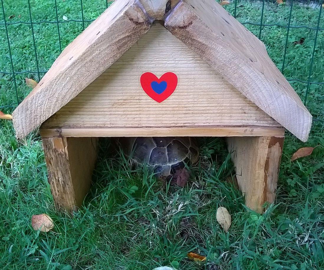 Home made Turtle House
