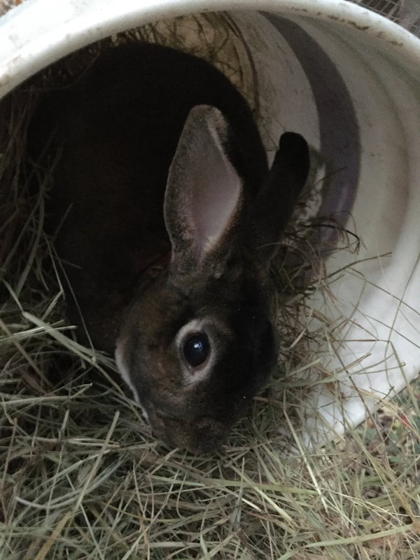 How to Make a Rabbit Hut Out of Simple Things