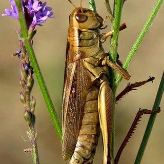 grasshopper-5.jpg
