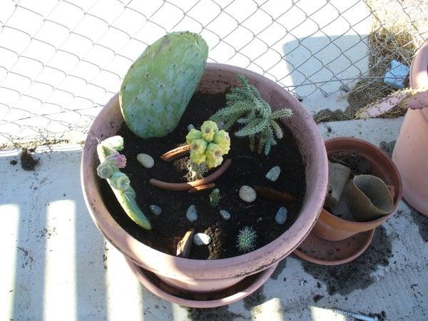 How to Make a Cactus Container Garden