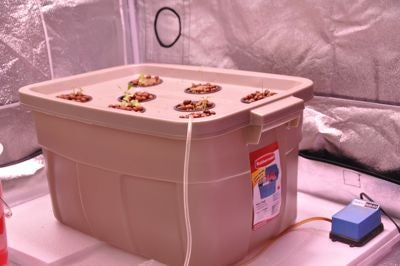 How to Plant Seedlings in a Hydroponics System