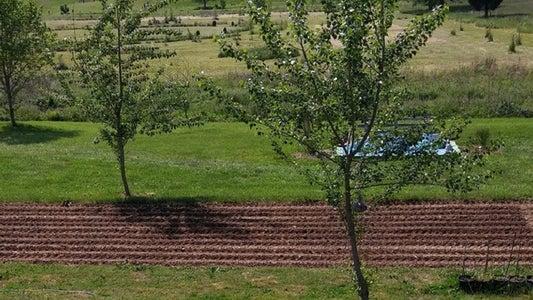 Fertilizing Your Corn