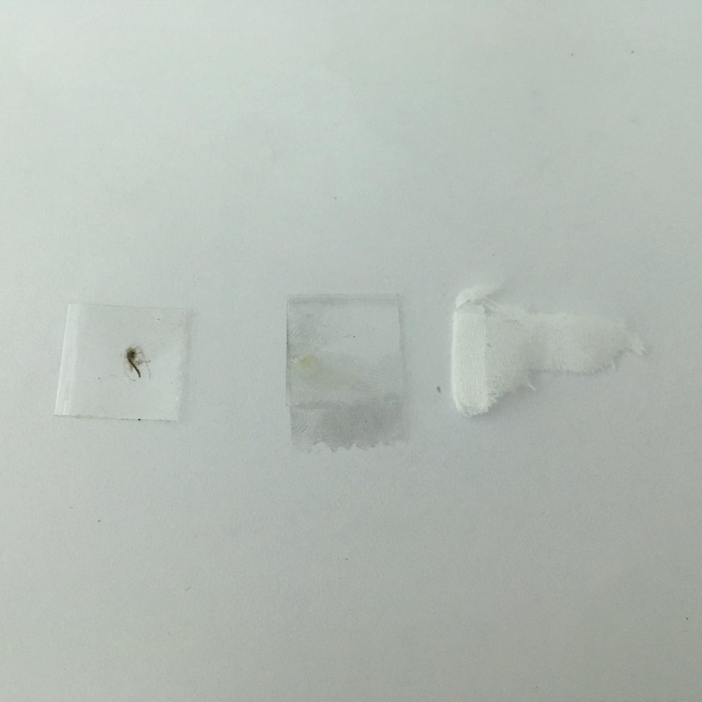 Specimens Under the Microscope