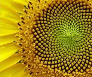 Do Plants Do Maths?