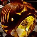 SHARKIN Carving